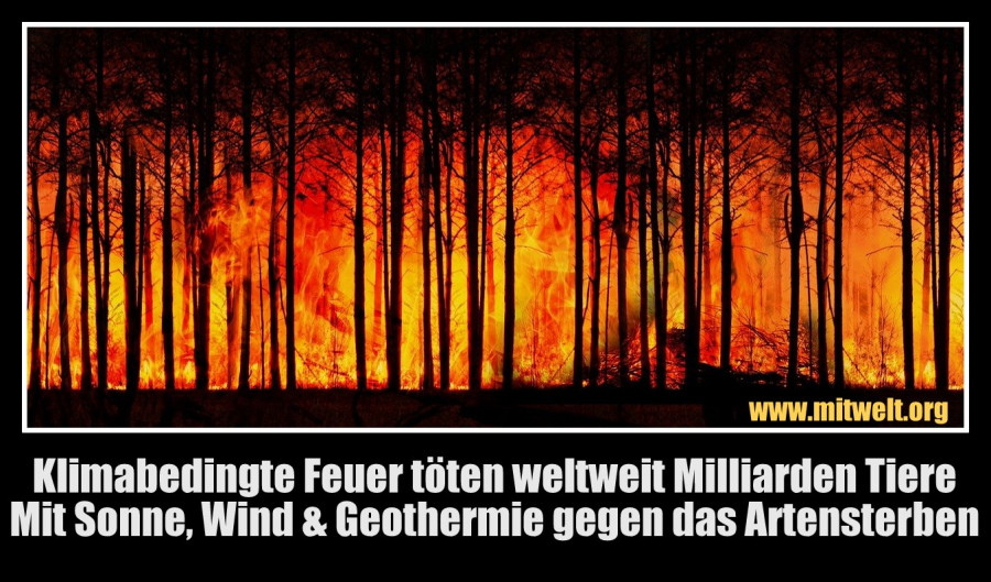 Klimawandel,Feuer, Waldbraende, Artensterben,Windenergie